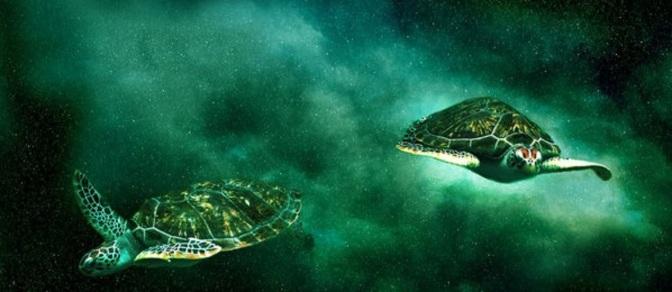 turtles in space2